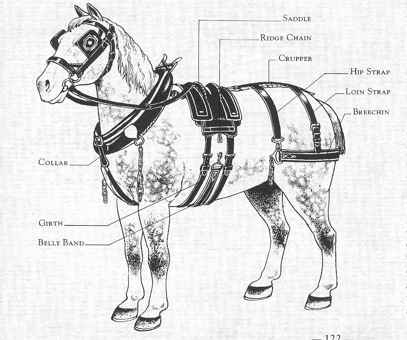 Jeanne Flann explains aspects of a work horse harness, circa 1940