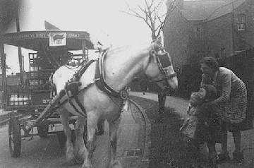 A picture of horse drawn milk float like the one I used to take around. Like my horse, this one expects and likes the treats.