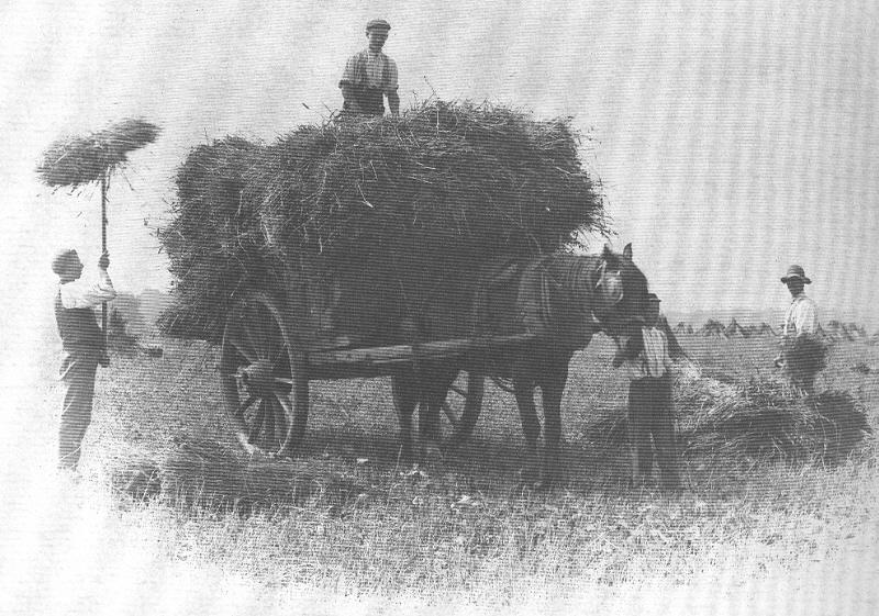 A picture of men loading hay onto a horse drawn cart.