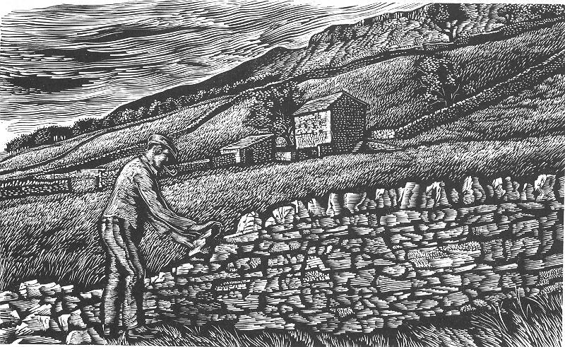 Picture of a worker repairing a dry stone wall with a view of the fells that features an out barn.
