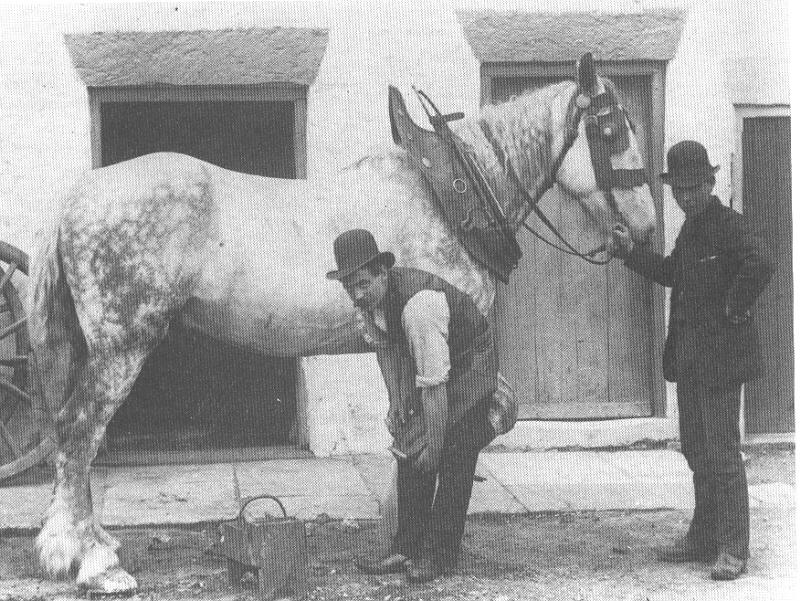 A picture of a blacksmith at work shoeing a horse. Just like the gentlemen here holding the horse, this was my duty when I took our horses into the blacksmith.