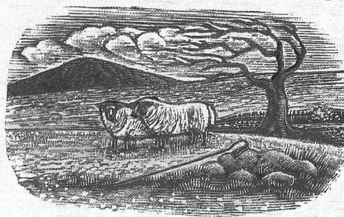 A picture of sheep on the fell, a shepherd's crook in the foreground.